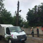 Clip 'Em and Fell 'Em Tree Removal