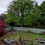 Clip 'Em and Fell 'Em Tree Reduction