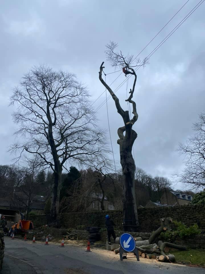 Clip 'Em and Fell 'Em Tree Dismantling