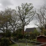 Heavy Oak Reduction